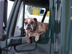 trasporto animali vivi normativa